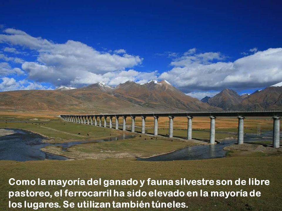 Como la mayoría del ganado y fauna silvestre son de libre pastoreo, el ferrocarril ha sido elevado en la mayoría de los lugares.