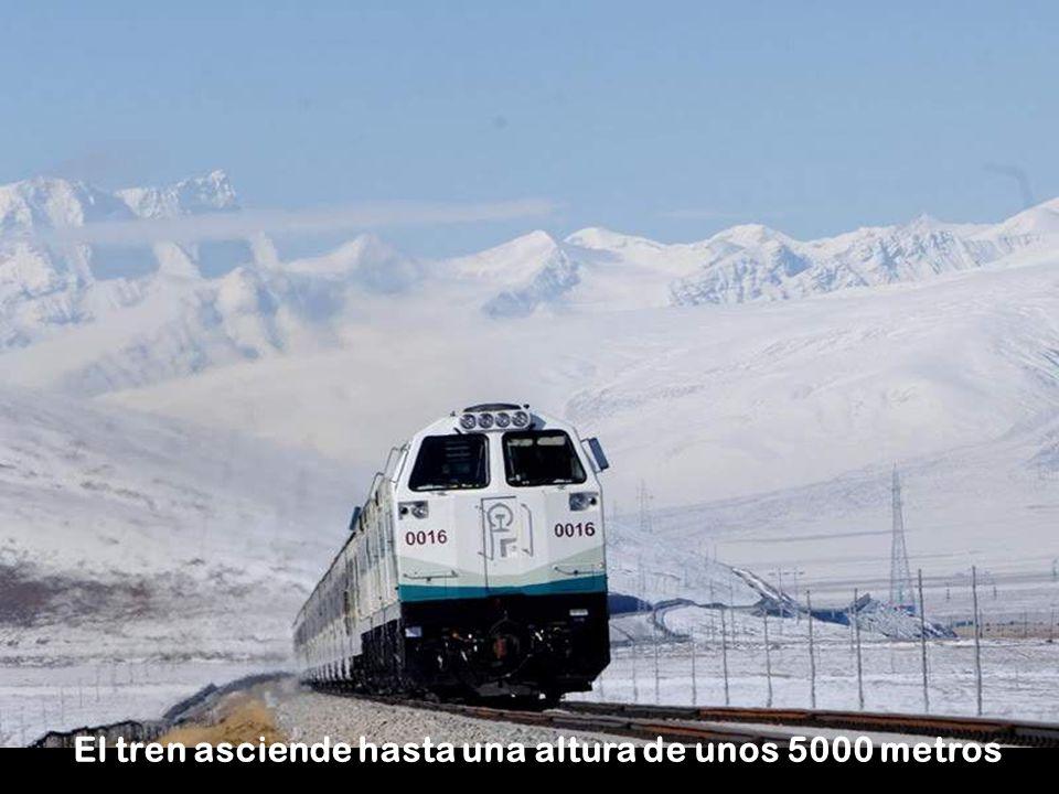 El tren asciende hasta una altura de unos 5000 metros