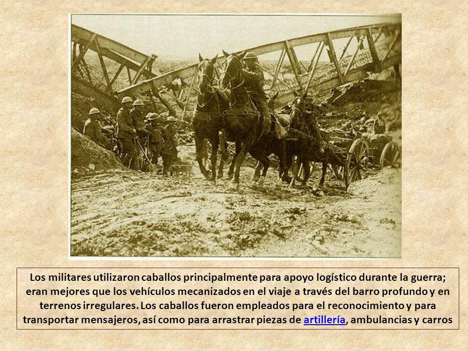 Los militares utilizaron caballos principalmente para apoyo logístico durante la guerra; eran mejores que los vehículos mecanizados en el viaje a través del barro profundo y en terrenos irregulares.