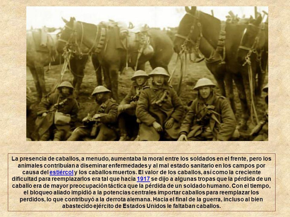 La presencia de caballos, a menudo, aumentaba la moral entre los soldados en el frente, pero los animales contribuían a diseminar enfermedades y al mal estado sanitario en los campos por causa del estiércol y los caballos muertos.