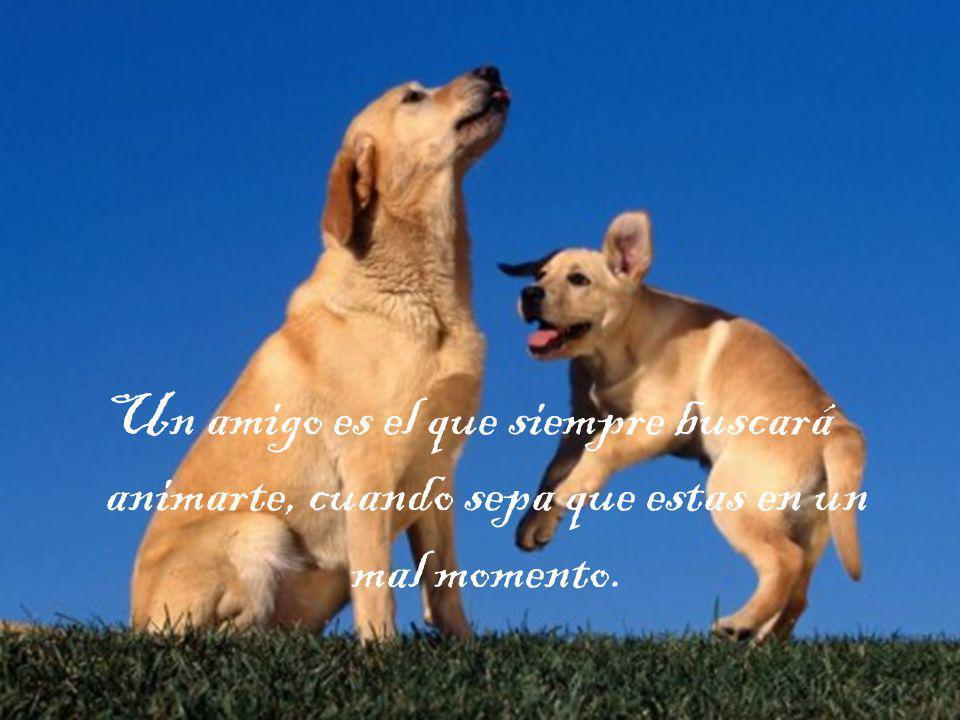 Un amigo es el que siempre buscará animarte, cuando sepa que estas en un mal momento.
