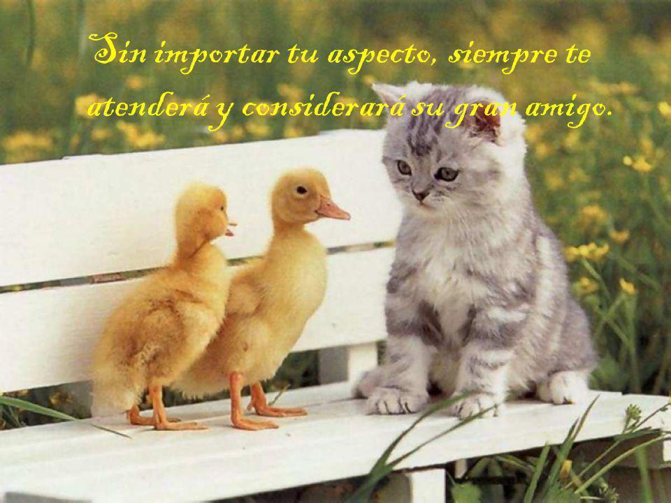 Sin importar tu aspecto, siempre te atenderá y considerará su gran amigo.