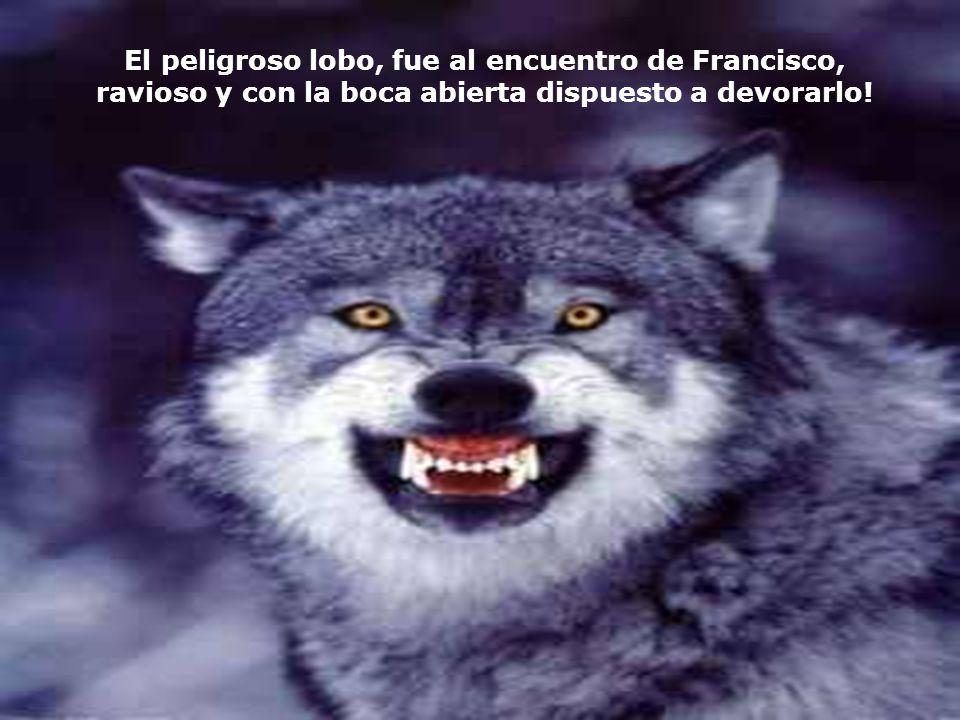 El peligroso lobo, fue al encuentro de Francisco,