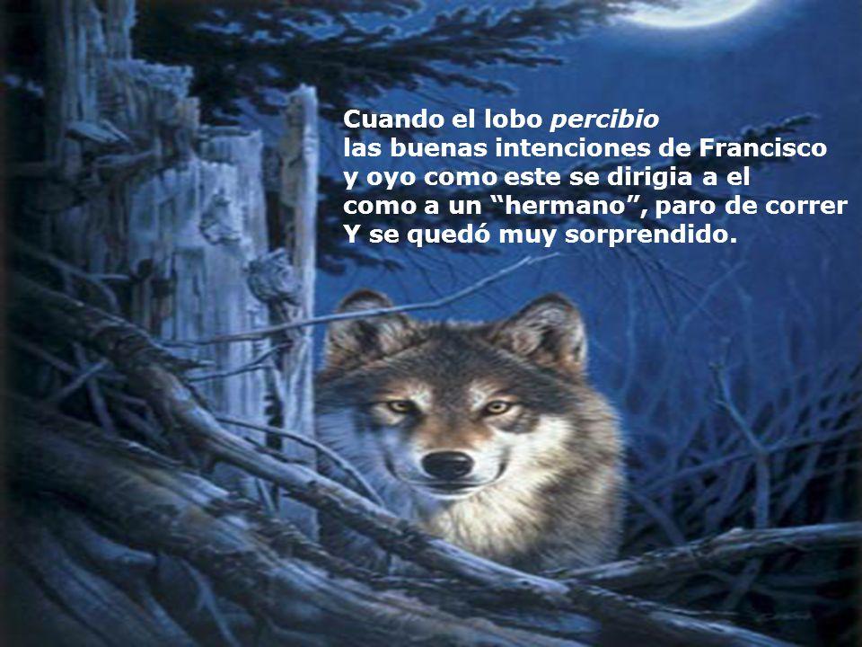 Cuando el lobo percibio