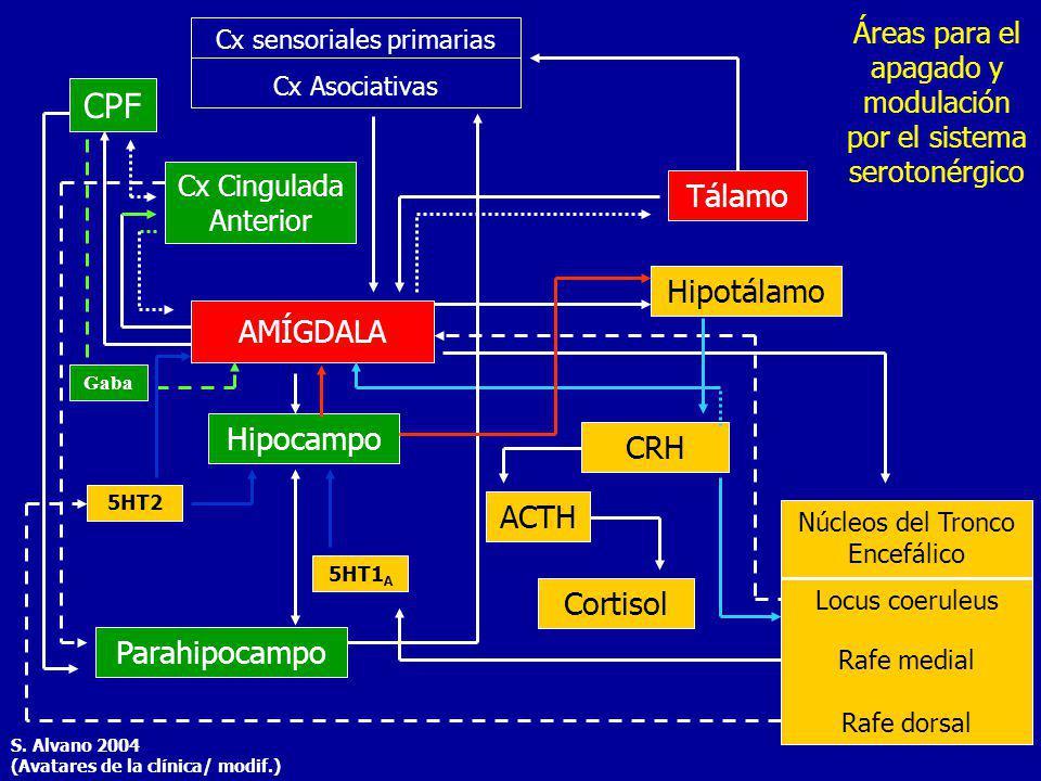 CPF Tálamo Hipotálamo AMÍGDALA Hipocampo CRH ACTH Cortisol