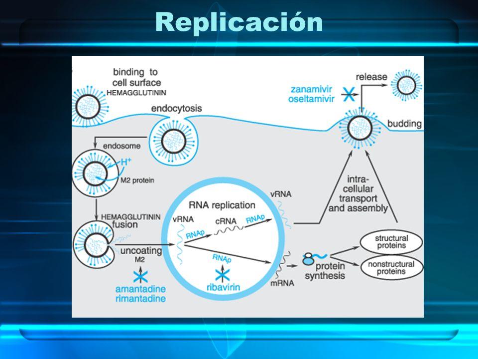Replicación