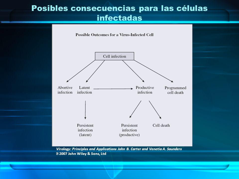 Posibles consecuencias para las células infectadas