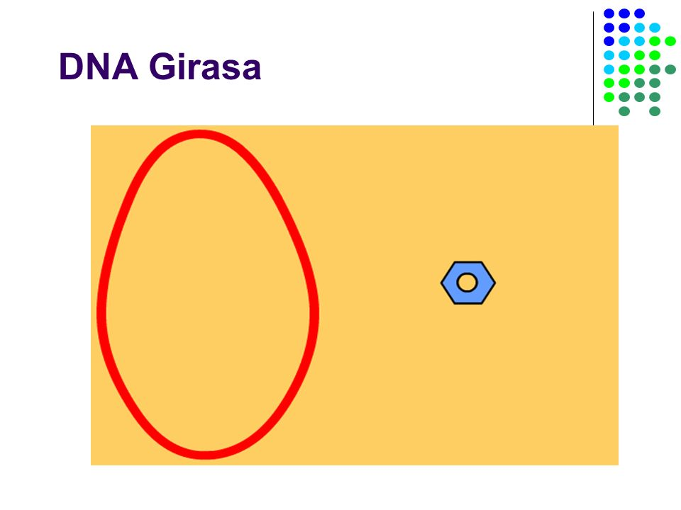 DNA Girasa