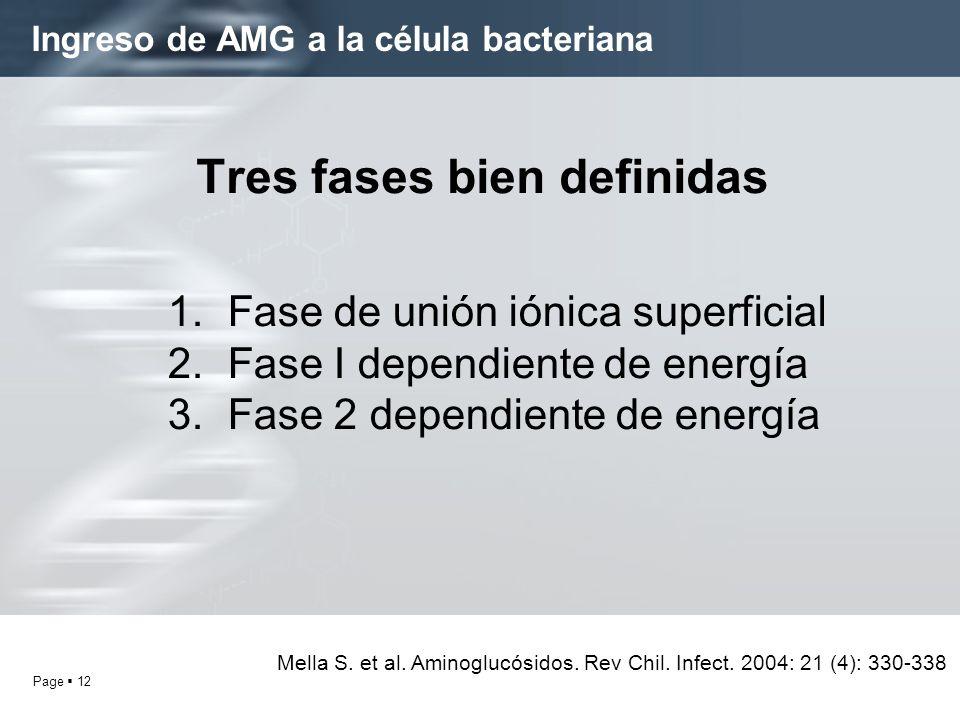 Ingreso de AMG a la célula bacteriana