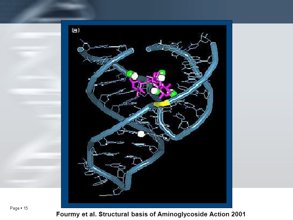 Fourmy et al. Structural basis of Aminoglycoside Action 2001