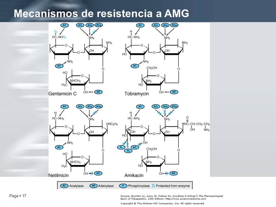 Mecanismos de resistencia a AMG
