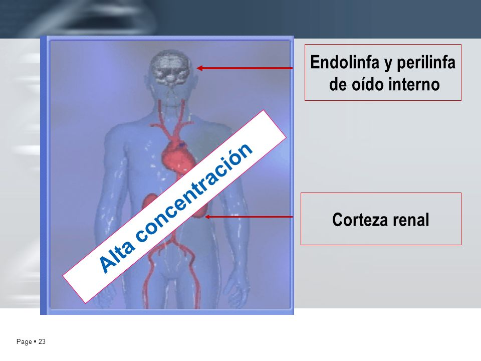 Endolinfa y perilinfa de oído interno Alta concentración Corteza renal