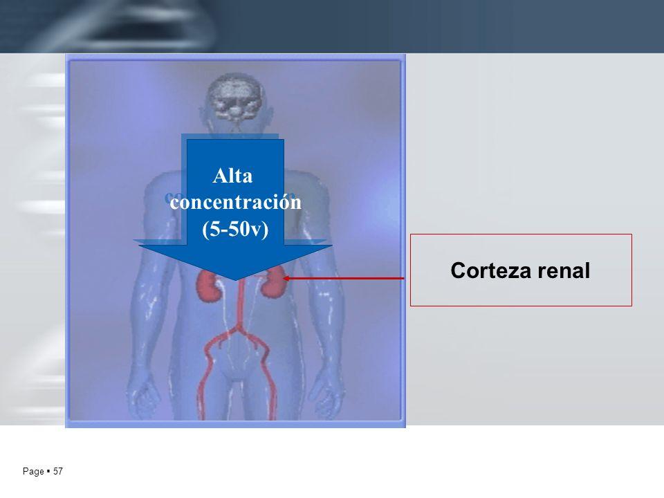 Alta concentración (5-50v) Corteza renal