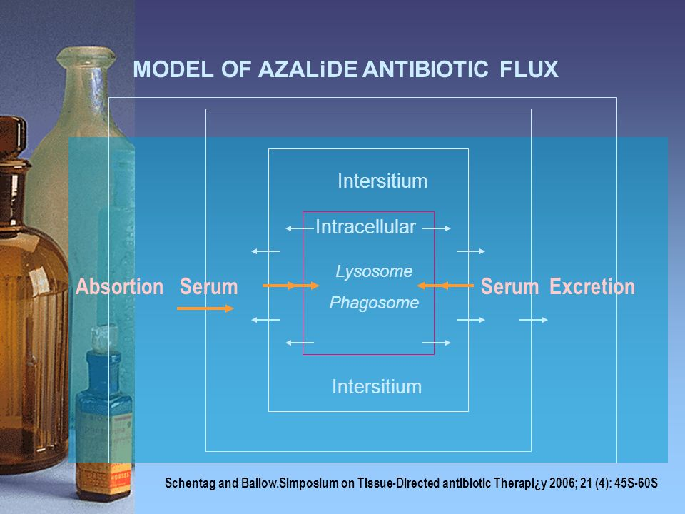 MODEL OF AZALiDE ANTIBIOTIC FLUX