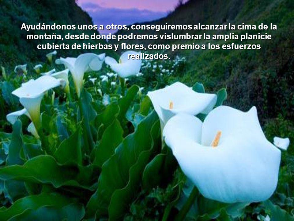 Ayudándonos unos a otros, conseguiremos alcanzar la cima de la montaña, desde donde podremos vislumbrar la amplia planicie cubierta de hierbas y flores, como premio a los esfuerzos realizados.