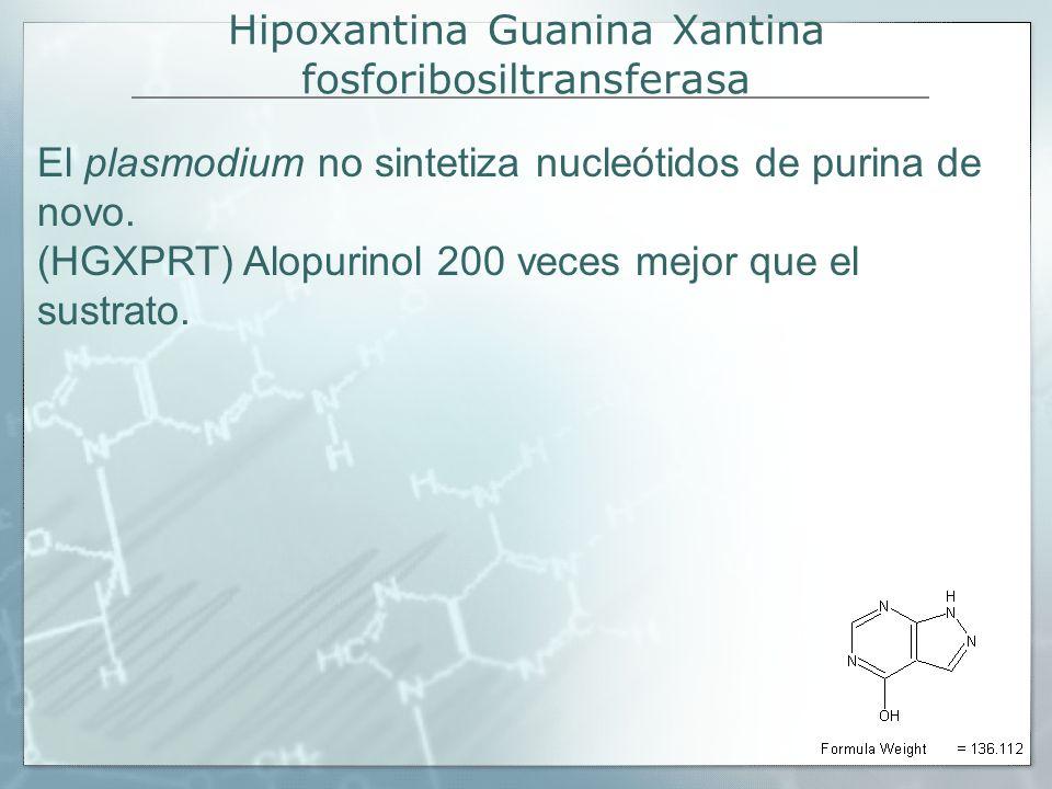 Hipoxantina Guanina Xantina fosforibosiltransferasa