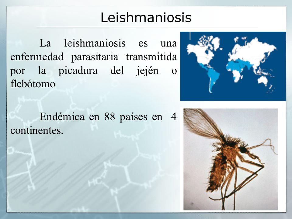 Leishmaniosis La leishmaniosis es una enfermedad parasitaria transmitida por la picadura del jején o flebótomo.