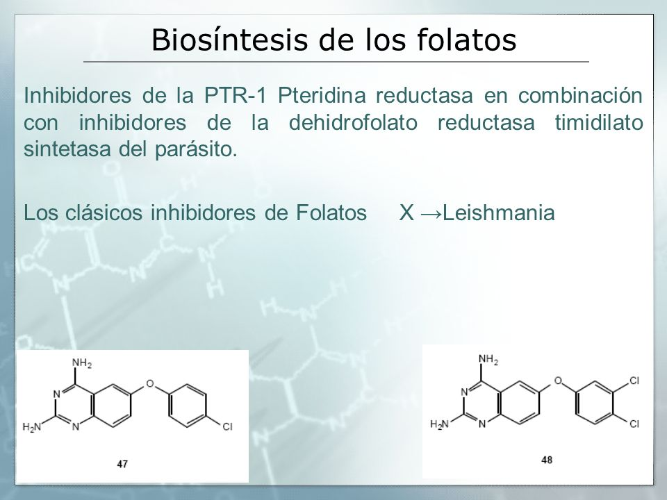 Biosíntesis de los folatos