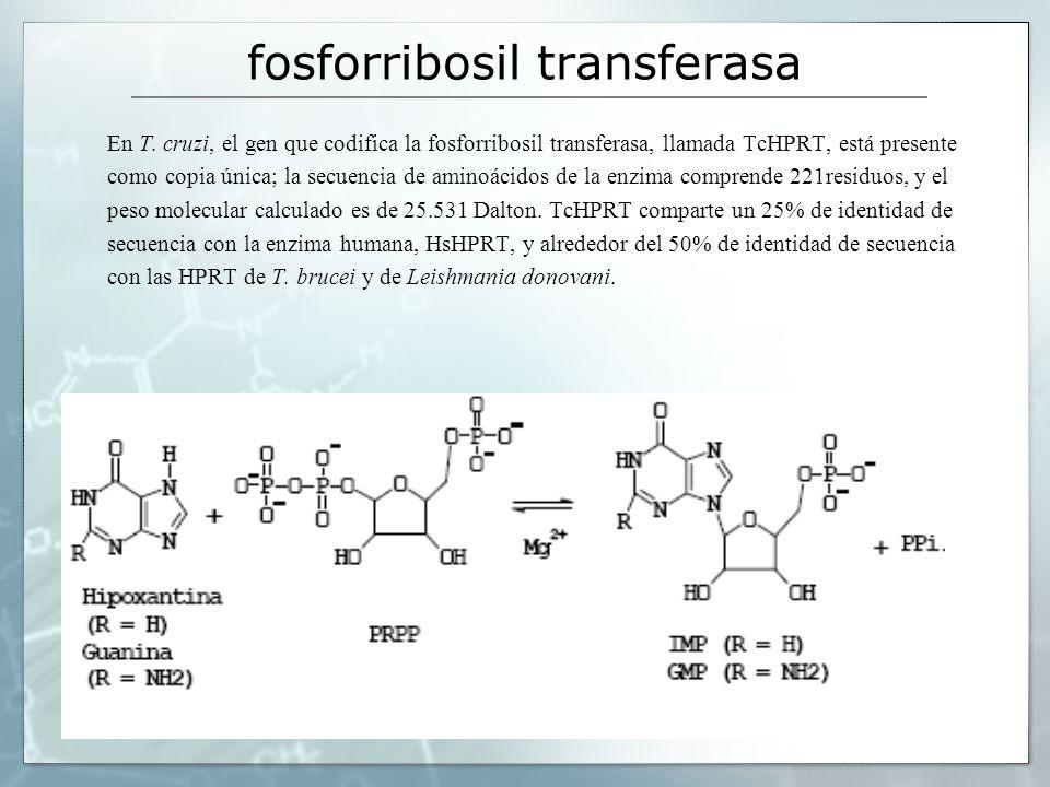 fosforribosil transferasa