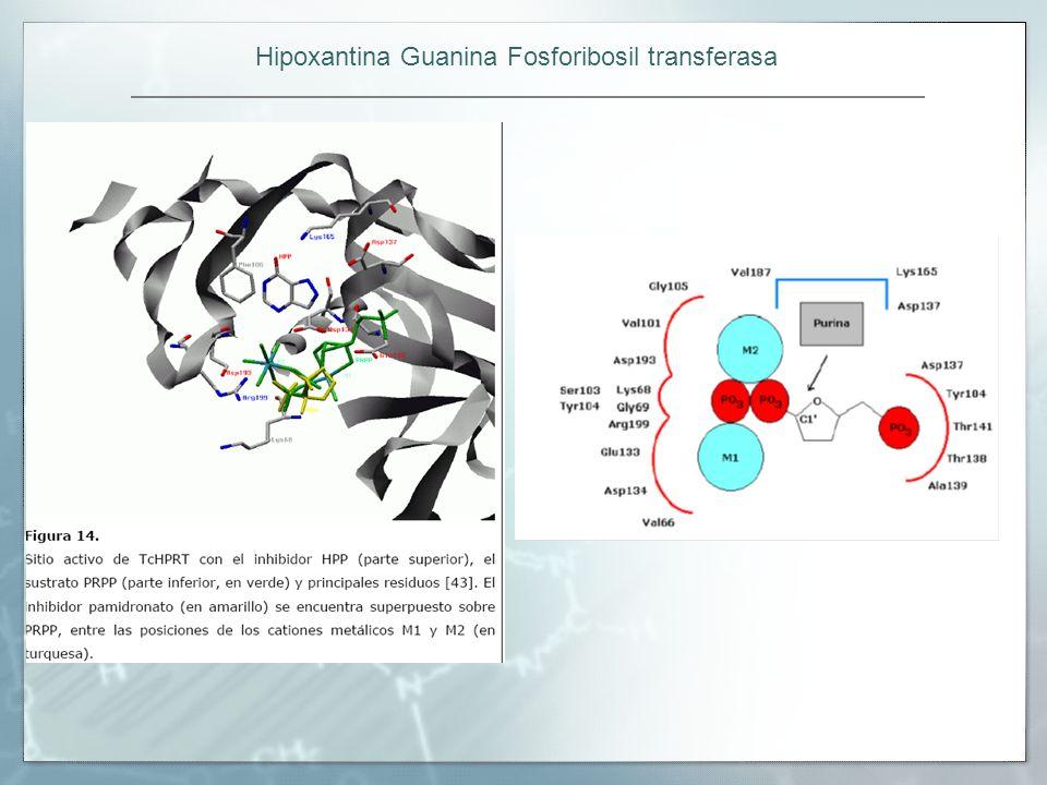 Hipoxantina Guanina Fosforibosil transferasa