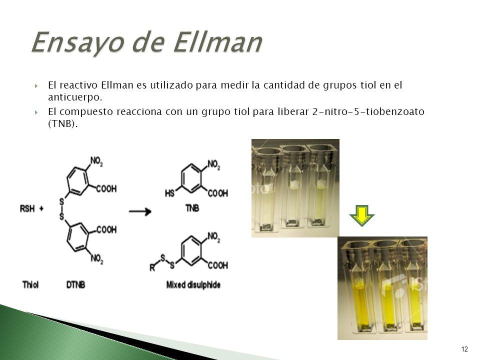 Ensayo de Ellman El reactivo Ellman es utilizado para medir la cantidad de grupos tiol en el anticuerpo.