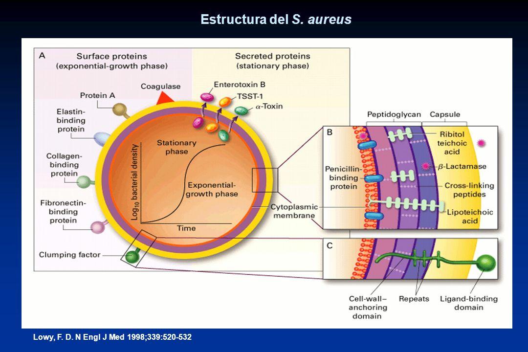 Estructura del S. aureus