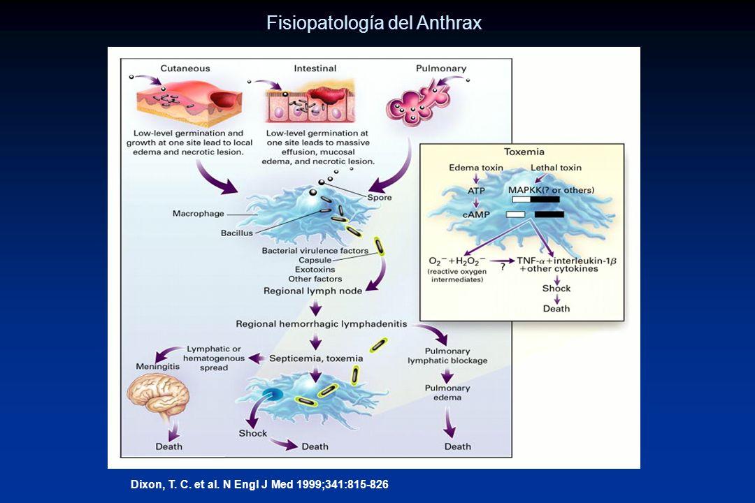 Fisiopatología del Anthrax
