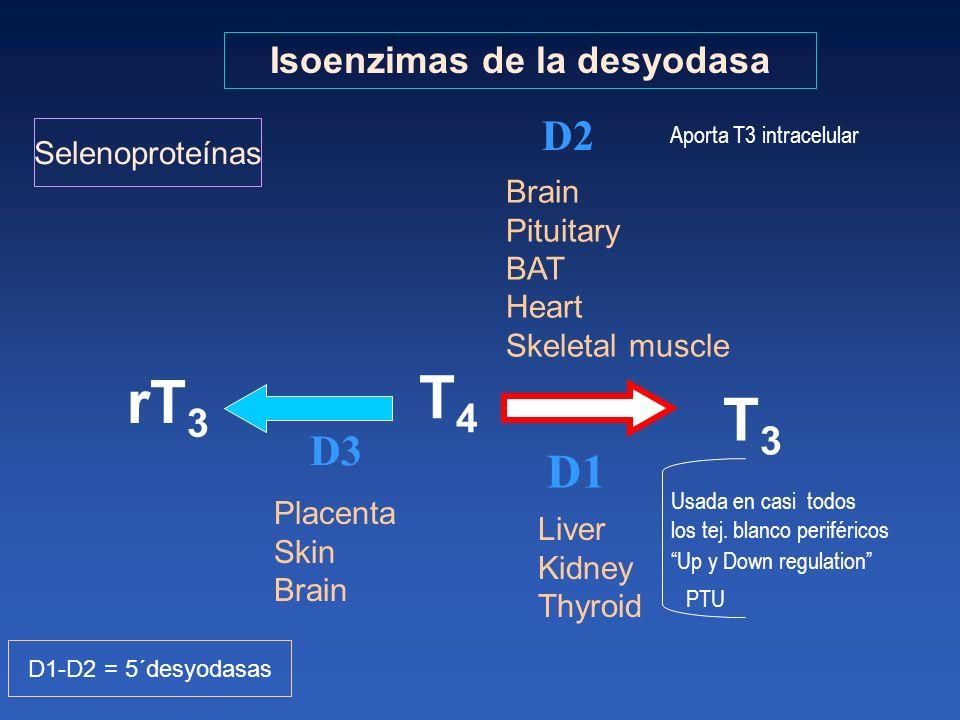 Isoenzimas de la desyodasa