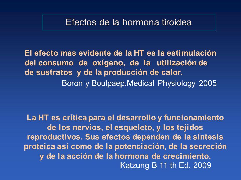 La HT es crítica para el desarrollo y funcionamiento