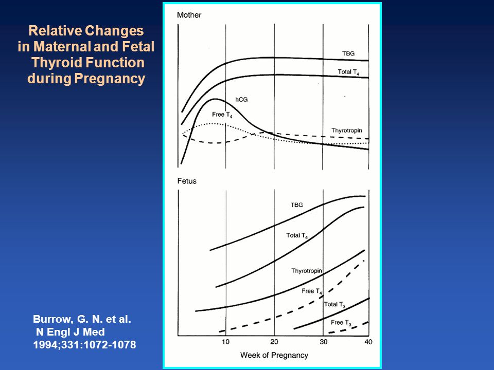Relative Changes in Maternal and Fetal Thyroid Function
