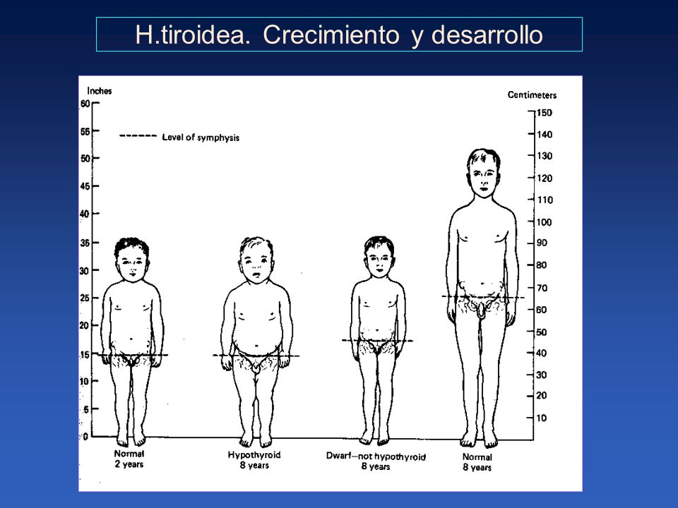 H.tiroidea. Crecimiento y desarrollo