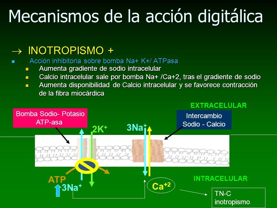 Mecanismos de la acción digitálica