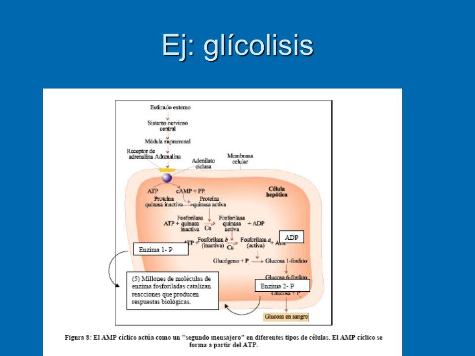Ej: glícolisis
