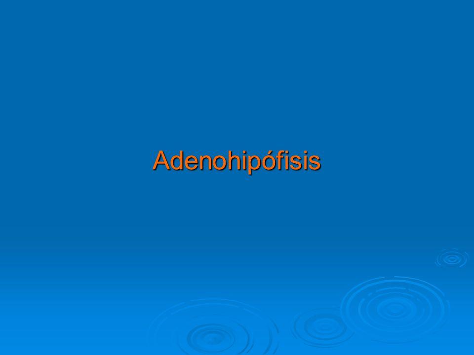 Adenohipófisis