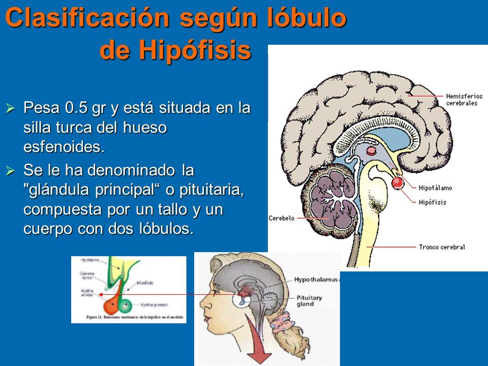 Clasificación según lóbulo de Hipófisis