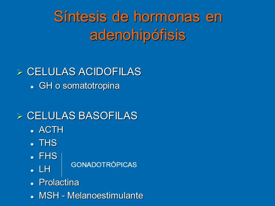 Síntesis de hormonas en adenohipófisis