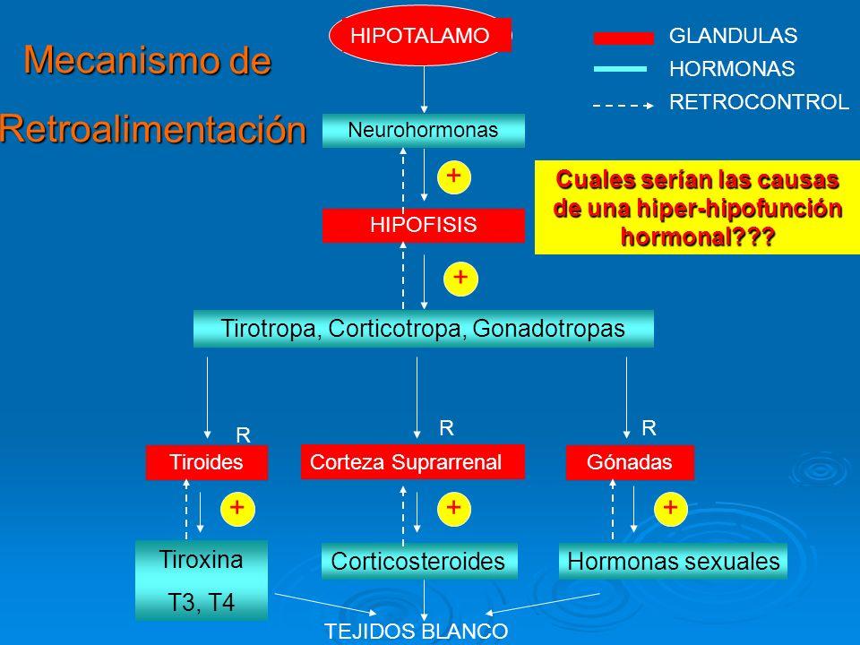 Cuales serían las causas de una hiper-hipofunción hormonal