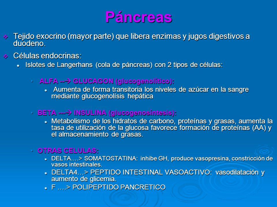 Páncreas Tejido exocrino (mayor parte) que libera enzimas y jugos digestivos a duodeno. Células endocrinas: