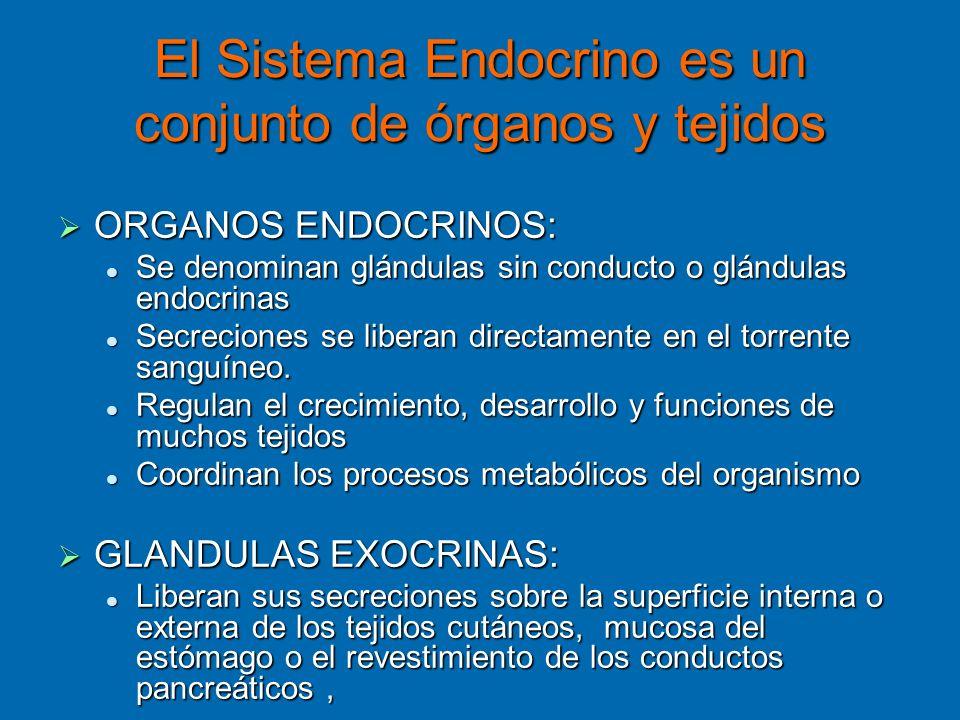 El Sistema Endocrino es un conjunto de órganos y tejidos