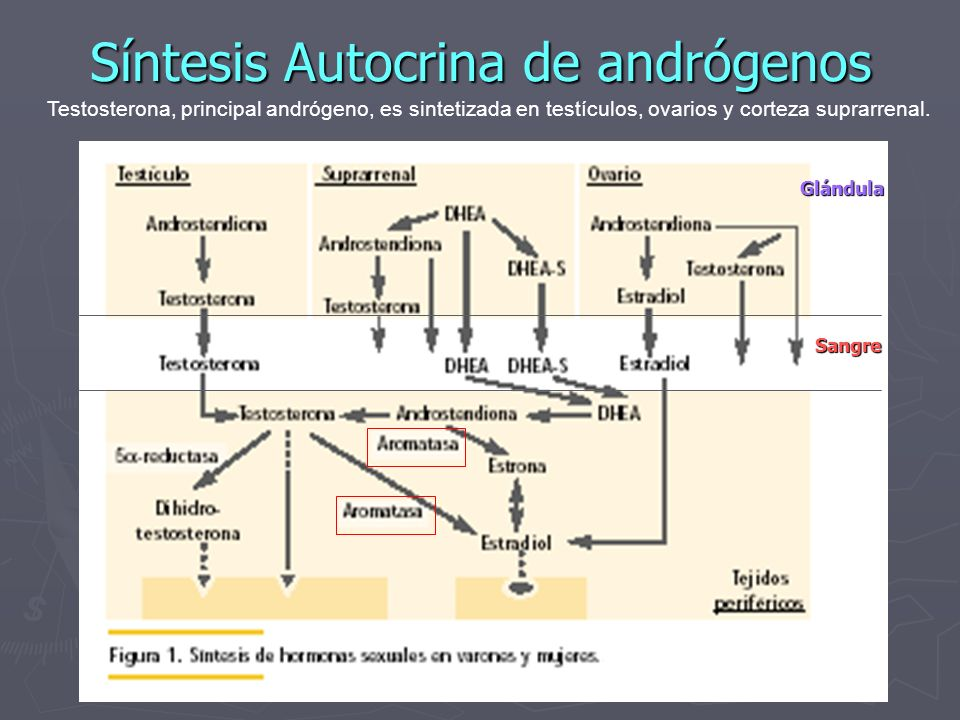 Síntesis Autocrina de andrógenos
