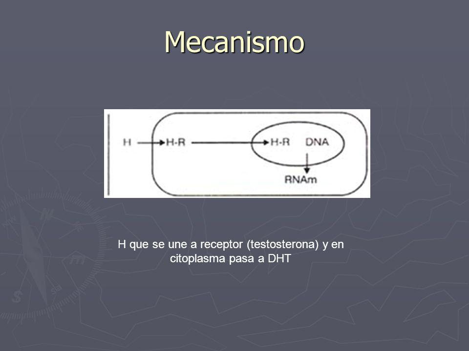 H que se une a receptor (testosterona) y en citoplasma pasa a DHT