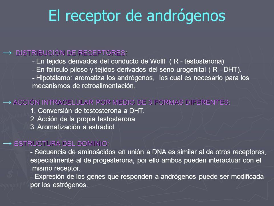 El receptor de andrógenos