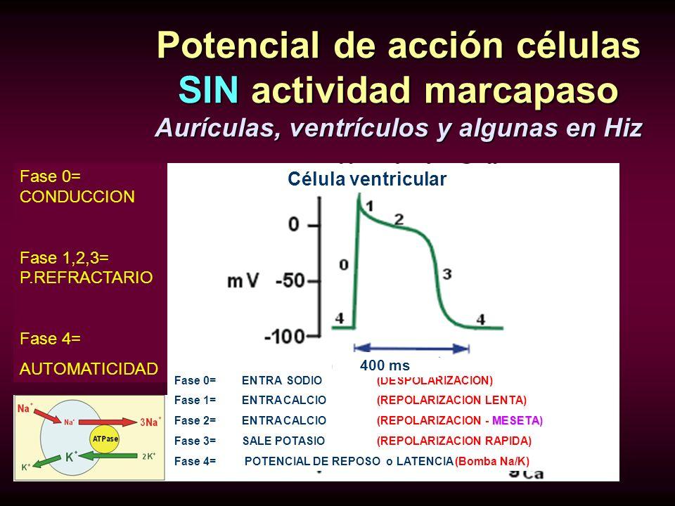 Potencial de acción células SIN actividad marcapaso Aurículas, ventrículos y algunas en Hiz