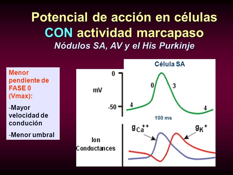 Potencial de acción en células CON actividad marcapaso Nódulos SA, AV y el His Purkinje