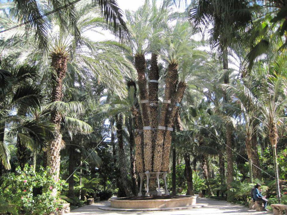 En 1894, la emperatriz Elisabet de Austria, Sissi , visitó el huerto y, en agradecimiento, don José bautizó a la más bella de sus palmeras: La Palmera Imperial .