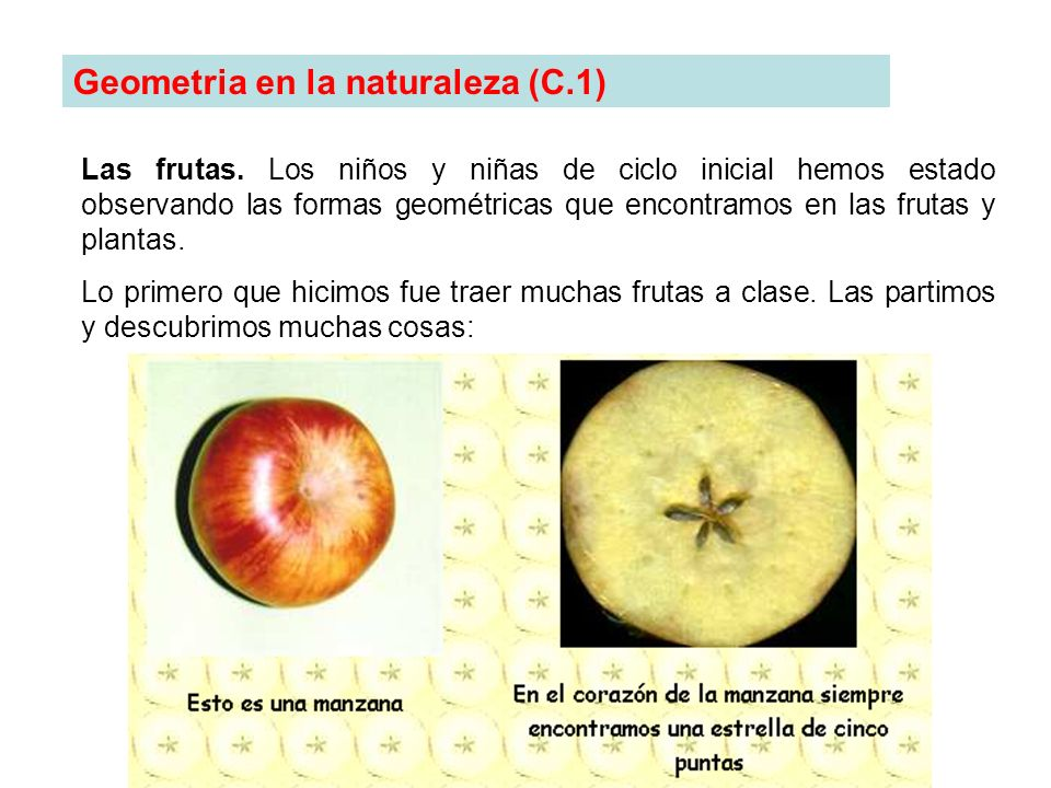 Geometria en la naturaleza (C.1)