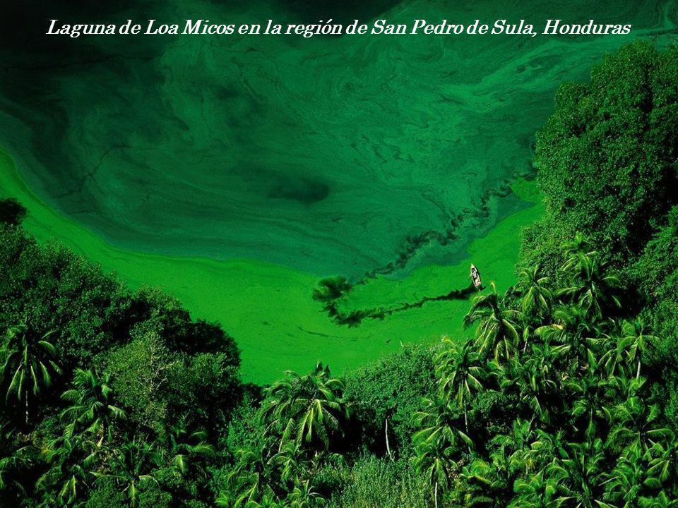 Laguna de Loa Micos en la región de San Pedro de Sula, Honduras
