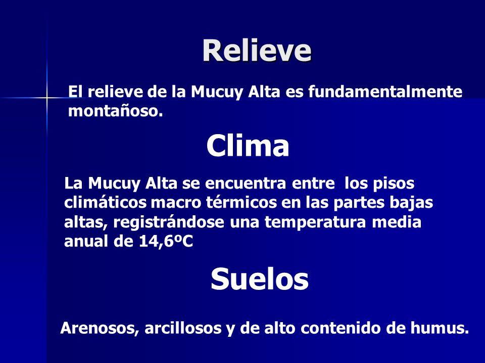 Relieve El relieve de la Mucuy Alta es fundamentalmente montañoso. Clima.
