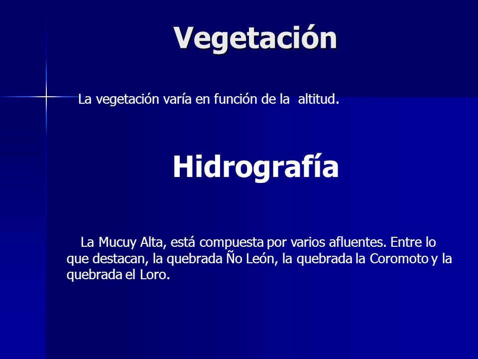 Vegetación Hidrografía