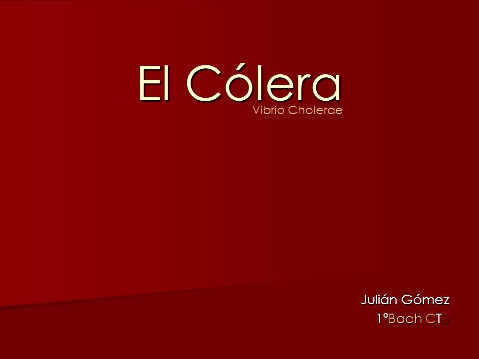 El Cólera Vibrio Cholerae Julián Gómez 1ºBach CTB